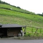 ココ ファームカフェ - 斜度のきついぶどう畑