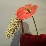 フリッタフラッタ - 表参道のflowers-shop 『primitive』のお花達