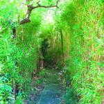 雙柿庵 - 笹で囲まれたお店への通路