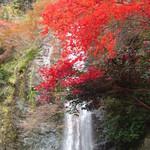 久國紅仙堂 - もみじの天ぷらを食べながら→箕面大滝の紅葉へ是非♪