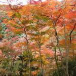 久國紅仙堂 - もみじの天ぷらを食べながら、一目千本(箕面大滝からさらに10分登ります)