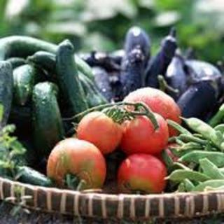 農家さんの愛情たっぷり◎新鮮な野菜は生の方がおいしい!