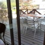 カフェ ピノ - 店内から見たテラス席