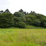 ビッグ・ジョー - 応神天皇陵の側にあります。