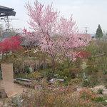 オープンカフェ はぴねす - 春から夏にかけてお花がとても綺麗です。