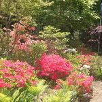 オープンカフェ はぴねす - バルコニーでお花を見ながらおいしいパスタも食べれます。