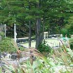 万座高原ホテル - 混浴の露天風呂も見えますが自然です。