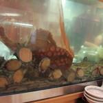 まるとく食堂 - お店の入り口付近のカウンターにある生簀には新鮮な玄海灘の魚介類が泳いでいます