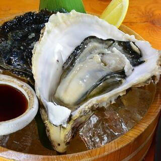 海女小屋イチオシ、五島列島産の岩牡蠣「ツバキ」