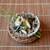 千松しま - 料理写真:『蒸し鮑とわらび、出汁のジュレ』