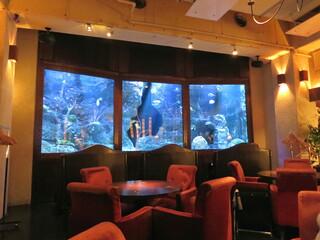 DEN AQUAROOM AOYAMA - わぁ~、水族館だぁ~。