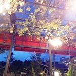 15279222 - 葡萄棚のフレンチテラス