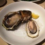 15282229 - 岩牡蠣と真牡蠣