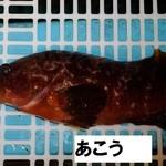 魚庄 - 幻の魚あこう
