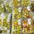 業務スーパー - 料理写真:南高梅で〜♬