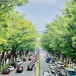 153516125 - ◎表参道の美しいケヤキ並木。