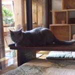 モクセイ - 看板猫?