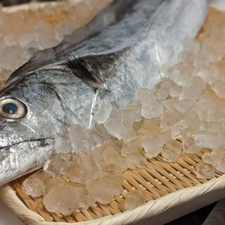 7月の鮨崚メイン食材【太刀魚】
