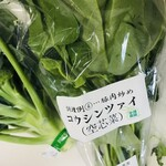 154235430 - 空芯菜