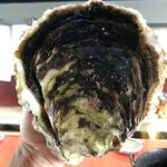 殻の三光橋 - 特大岩牡蠣