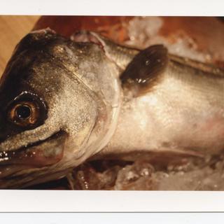朝獲れた魚が、午後には店に。産直朝獲れ魚介の店。