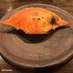 154929646 - 菱蟹と和製ポルチーニと焼トマトのパスタ