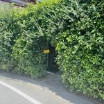 トラットリア モリタ - 緑のアーチ