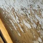 屋台おかもと - 天井には有名人のサインが一杯
