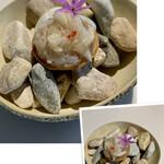 156002026 - 山盛り毛蟹タルト