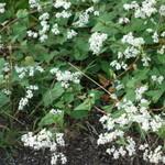 15628058 - 店の前に咲いている小さな花