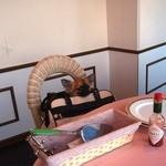 オーシャンパシフィックカフェ -
