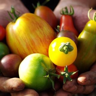 無農薬無化学肥料の自家農園から