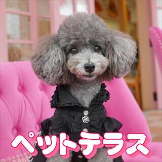 ピンクの激かわ空間♡ペットテラスで愛犬とつく別なお時間を☆
