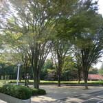 15735004 - 砧公園は、外周をサイクリングできる広さ