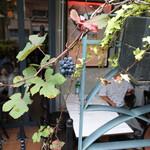 CAFE GITANE - 今年初めて実った山ブドウ