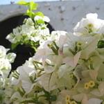 キッチン 赤いフォーク - 花好きのオーナーと、ガーデニング話に花が咲くことも♪