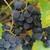 十字ヶ丘農園 - その他写真:ブドウ