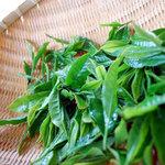 蔵屋鳴沢 - お茶摘み体験