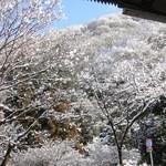 15969449 - ホテルからの雪景色