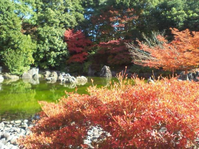 ガーデンラウンジ フォンテ - 紅葉がきれい♪