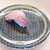 はま寿司 - 料理写真:黒毛和牛握り