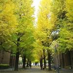 東京大学 中央食堂 -