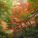 久國紅仙堂 - もみじの天ぷらを食べながら、中ノ千本(箕面大滝からさらに20分登ります)