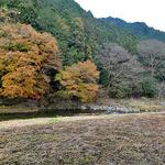 小来川 山帰来 - 店内からの眺め(手前ではソバが栽培されていたようです)