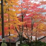 箱根松月堂菓子舗 - 長安寺の紅葉