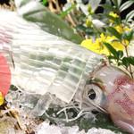 活イカ・サバ・もつ鍋 いっ得家 - メニュー写真:いっ得家の名物、呼子のイカです!