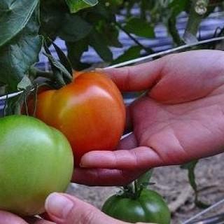 農薬、化学肥料を使わない農法で育った野菜です!