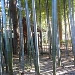 菩提樹 - 窓から見える竹林
