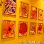 GIRASOLE - 壁にはお花の写真がセンスよく並べられています