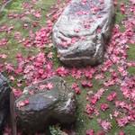 たわらや - 苔+落ち葉&岩コラボ